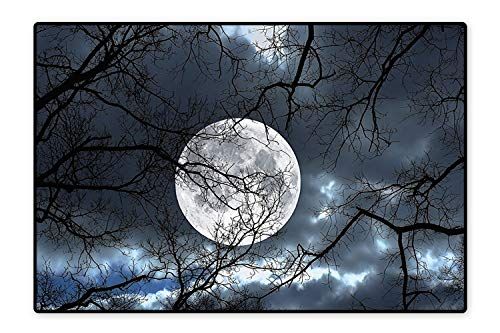Water-Repellent Rugs Full Moon at Night in The Forest Winter Time Mystical Dramatic Days Luna Photo Slate Blue Black Anti Bacterial 4'7