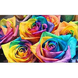 100 Count Rainbow Rose Seeds