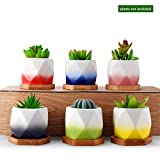Mini Cute Ceramic Succulent Cactus Planter Pot Set Holder,Unique Color Glaze Container Kit for Home Decoration with Drainage Hole Bamboo Tray,Small Colorful Stones by Homenote(1 pack of 6)