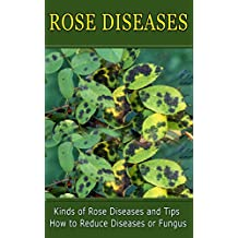 Rose Diseases: Kinds of Rose Diseases and Tips How to Reduce Diseases or Fungus