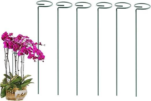 Paquete de 6 estacas de Soporte para Plantas, 40 cm de Largo, para el jardín, Soporte para estacas, Soporte para Plantas, para Flores, Tomates, Rosas y peonías, etc.: Amazon.es: Jardín