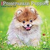 Just Pomeranian Puppies 2021 Wall Calendar (Dog Breed Calendar)