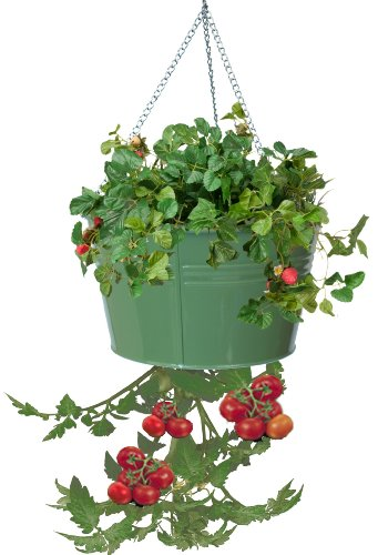 HIT 8399E SA Galvanized Heavy Gauge Steel Hanging Tomato Herb Planter, 13.5 by 8-Inch, Sage
