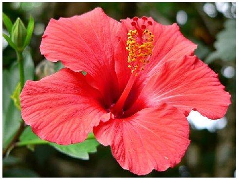 GROWN ORGANICALLY Premium Dried Hibiscus Tea,Hibiscus Flowers Tea,Jaimaica Tea,Fresh and best quality guarantee,UNBEATABLE QUALITY AT THIS PRICE!! (Beverage Cut Hibiscus Tea, 160 oz (10 LB)) by PowerNutri Shop (Image #2)