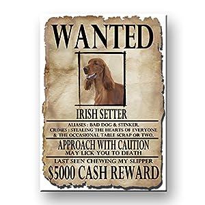 Irish Setter Wanted Poster Fridge Magnet Funny 13