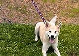 Paw Print Dog Leash - Puppy Paw Print Dog Leash