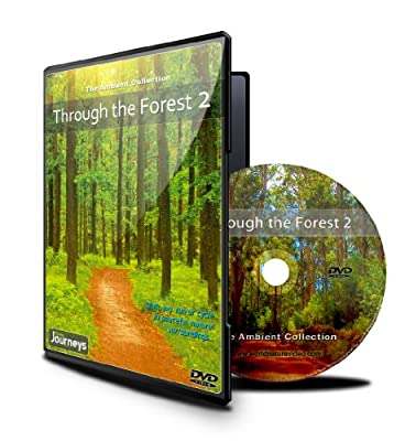 Fitness Journeys - Through the Forest 2, for indoor walking, treadmill and cycling workouts