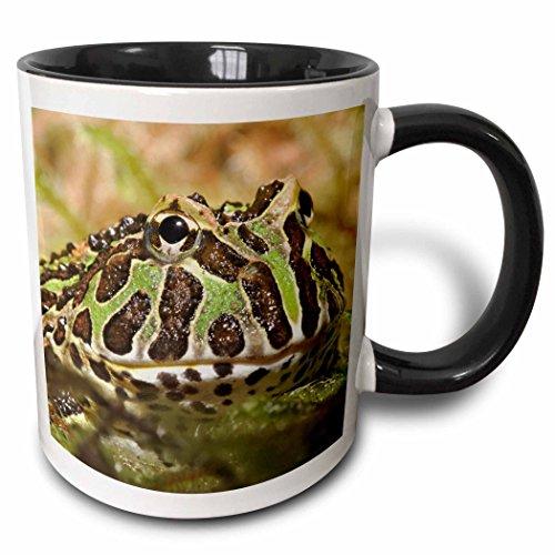 3dRose 83641_4 Pacman Frog, South American Horned frog-NA02 AJE0359-Adam Jones Two Tone Mug, 11 oz, Black/White