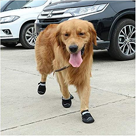 Werse Zapatos Impermeables Impermeables para Perros Otoño E ...