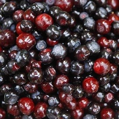 50 Seeds Mountain Huckleberry Bush Seeds (Vaccinium membranaceum)