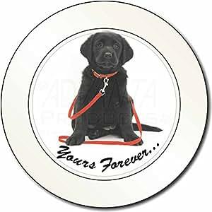 ' Hasta Siempre ' Goldador perros Impuesto de matriculación disco regalo permisi