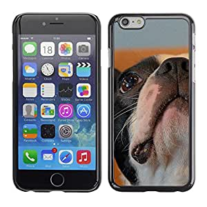 Vortex Accessory Carcasa Protectora Para APPLE iPHONE 6 - Boston Bulldog Terrier French Dog Bull -
