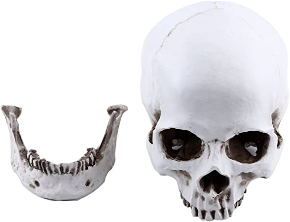 Life Size Replica Realistic Human Skull Head Bone Model Anatomy White Resin Skull High Precision Teaching Tool Halloween Decor