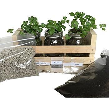 Amazon Com Modern Sprout Garden Jar Basil Home Amp Kitchen
