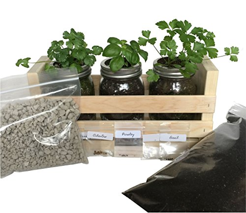 (Indoor Herb Garden Kit -Great for Growing an Indoor Herb Garden, Includes Everything You Need to Grow a Herb Garden (Cilantro,Basil,Parsley) in a Simple Container)