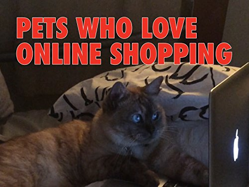 Clip: Pets Who Love Online Shopping ()