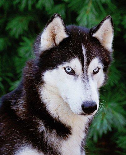 Siberian Huskies (Complete Pet Owner's Manual) 3