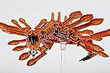 Firedrake MINT/New