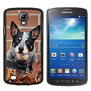 TECHCASE---Cubierta de la caja de protección para la piel dura ** Samsung Galaxy S4 Active i9295 ** --Rata Terrier Toy Fox Pequeño perro de la caída del otoño