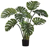 Large Premium Live Indoor Split-Leaf Philodendron, Monstera deliciosa 3 Gallon Pot
