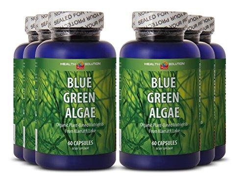 Klamath blue green algae powder - BLUE GREEN ALGAE - rich in antioxidants (6 bottles)