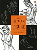 The Human Figure: An Anatomy for Artists