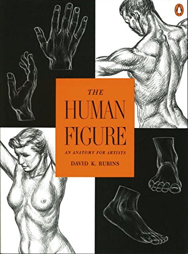 The-Human-Figure-An-Anatomy-for-Artists