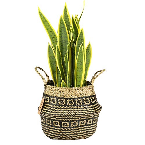 LEEPES Large Natural Woven Seagrass Tote Belly Basket for Storage,Laundry, Picnic,Plant Pot Cover,and Beach Bag(10.5