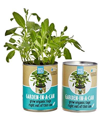 Sage Plant - 3
