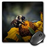 3dRose LLC 8 x 8 x 0.25 Inches Mouse Pad, Wild Flower with Bumble Bee Helping One Another - Close Up Image with Detail for Home Decor (mp_48668_1)