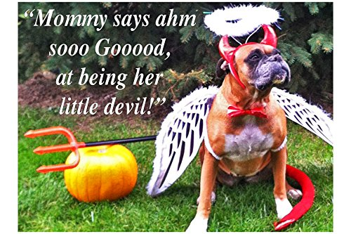 GOOD DEVIL— greeting card set 10 single cards & envs, same image, 5x7 in (12.7x17.78 cm) Ivory folded blank funny humorous color photo 4x6 in (10.16x15.24 cm) on front, Boxer Bulldog dog ()