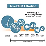 True HEPA Replacement Filter for Therapure