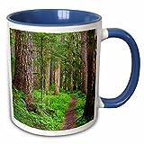 3dRose Danita Delimont - Trails - USA, Washington, Olympic National Park. Scenic of old growth forest. - 11oz Two-Tone Blue Mug (mug_209288_6)