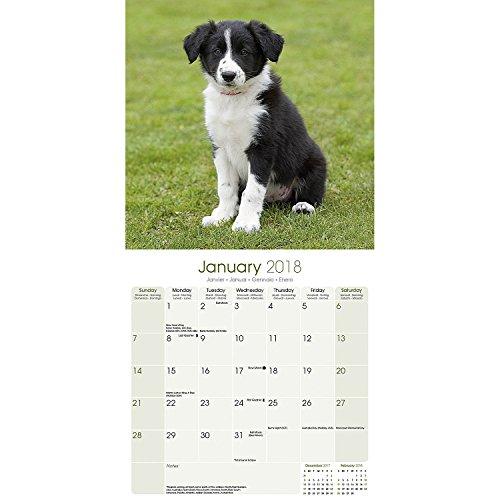 Border Collie Calendar 2018 - Dog Breed Calendar - Premium Wall Calendar 2017-2018 Photo #2