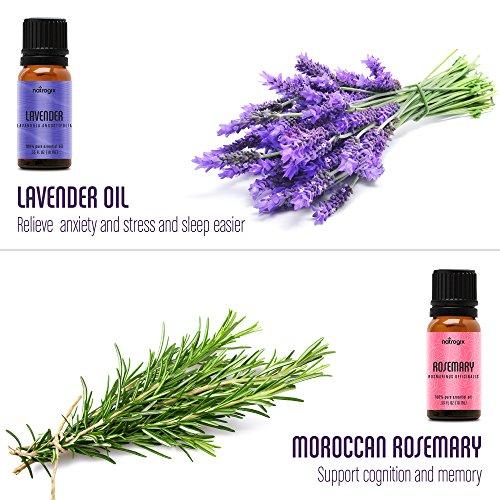 Natrogix Bliss Top 9 Therapeutic Grade 100% Pure Essential Oil Set (Eucalyptus, Frankincense, Lavender, Lemongrass, Lemon, Moroccan Rosemary, Sweet Orange, Tea Tree, Peppermint)