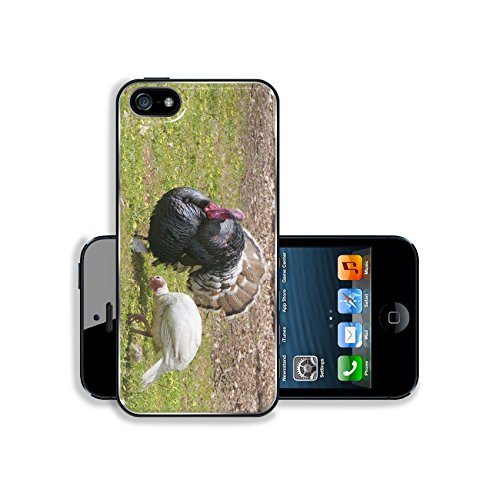 Luxlady Apple iPhone 5 iPhone 5S Aluminum Backplate Bumper Snap iphone5/5s Case IMAGE ID: 25083610 Wild Turkey Meleagris gallopavo family
