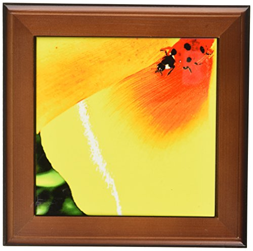 3dRose ft_25711_1 Yellow and Red Floral Ladybug Art-Framed Tile, 8 by (Ladybug Framed Tile)