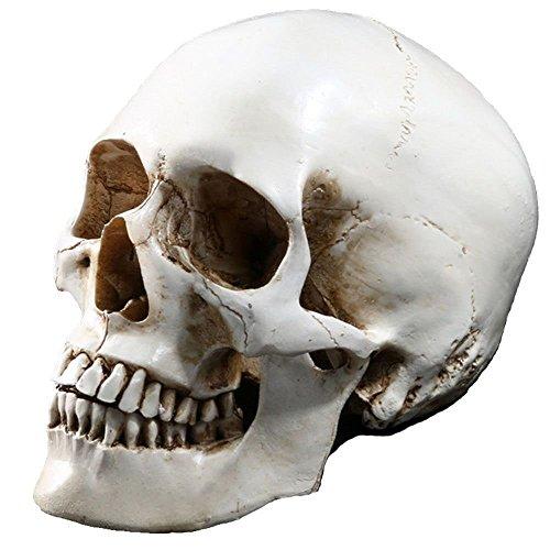 ISEYMI Halloween Resin Skull Models High Fidelity Human Skull Crafts Wacky Props (Skull Halloween Prop)