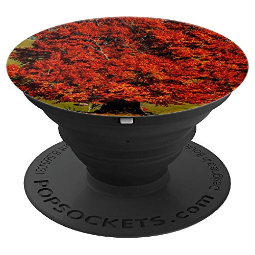 Gnarled Tree - Tree Beech Deciduous Tree Old Tree Gnarled Leaves - PopSockets Grip and Stand for Phones and Tablets