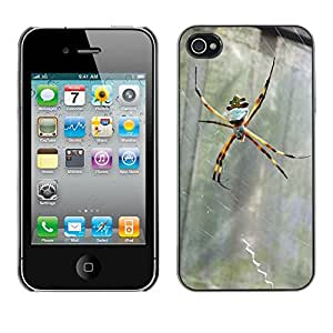 Just Phone Cases Slim Protector Hard Shell Cover Case // M00128880 Spider Insect Natura Nature Animals // Apple iPhone 4 4S 4G