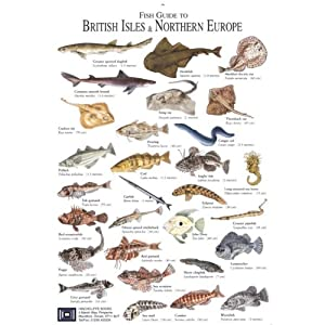 Types of irish sea fish pictures to pin on pinterest for All fish names