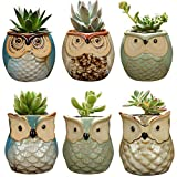 YLINGSU 6 in Set 2.5 Inch Owl Pot Ceramic Flowing Glaze Base Serial Set Succulent Plant Pot Cactus Plant Pot Flower Pot Container Planter Bonsai Pots with A Hole Perfect Gife Idea