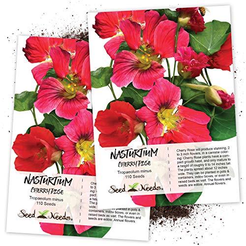 Seed Needs, Cherry Rose Nasturtium (Tropaeolum Minus) Twin Pack of 110 Seeds Each