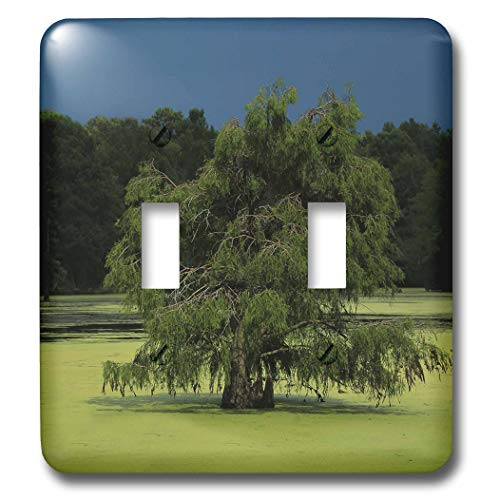 3dRose Stamp City - nature - Photo of cypress tree growing in the marsh at Magnolia Plantation. - Light Switch Covers - double toggle switch (lsp_295294_2)