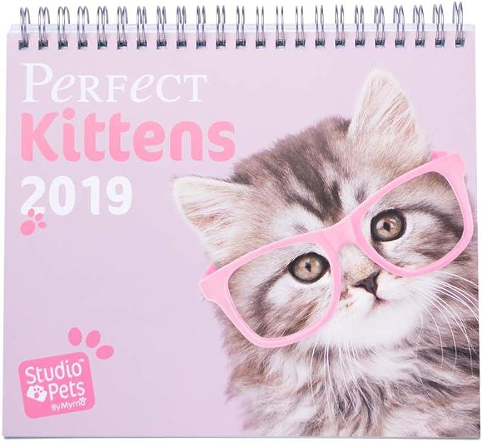 Grupo Erik Editores Studio Pets - Calendario de sobremesa 2019 con diseño gatos, 17 x 20 cm: Amazon.es: Oficina y papelería