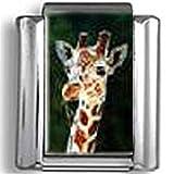 Giraffe photo Italian charm
