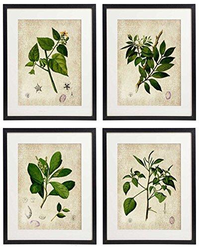 IDIOPIX Vintage Botanical Floral Print Art Home Wall Art Set of 4 Prints UNFRAMED No.2