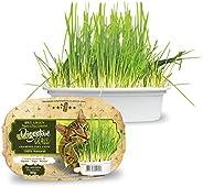 Ipet Green Digestive Grass Graminha Para Gatos 50G IPET para Todas Todos os tamanhos de raça Todas as fases -