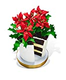 Poinsettia Flower Pot Cake