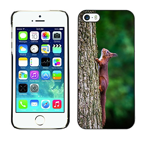 Premio Sottile Slim Cassa Custodia Case Cover Shell // F00005530 oiseau // Apple iPhone 5 5S 5G